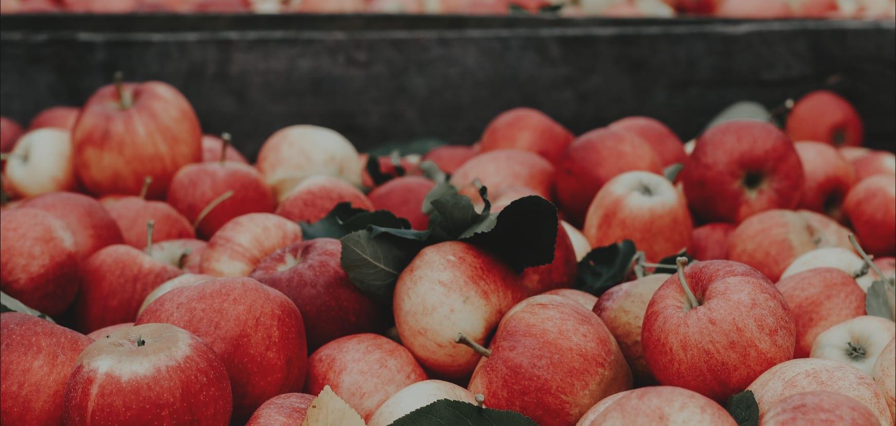 Äpfel in Großkiste aus dem Alten Land