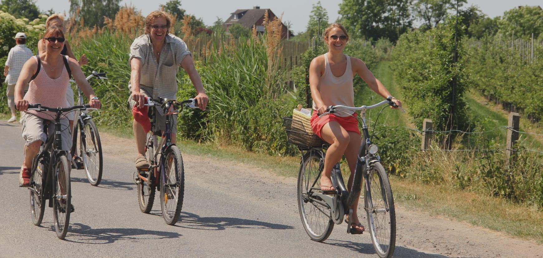 Radfahrer-Familie im Alten Land am Elbdeich