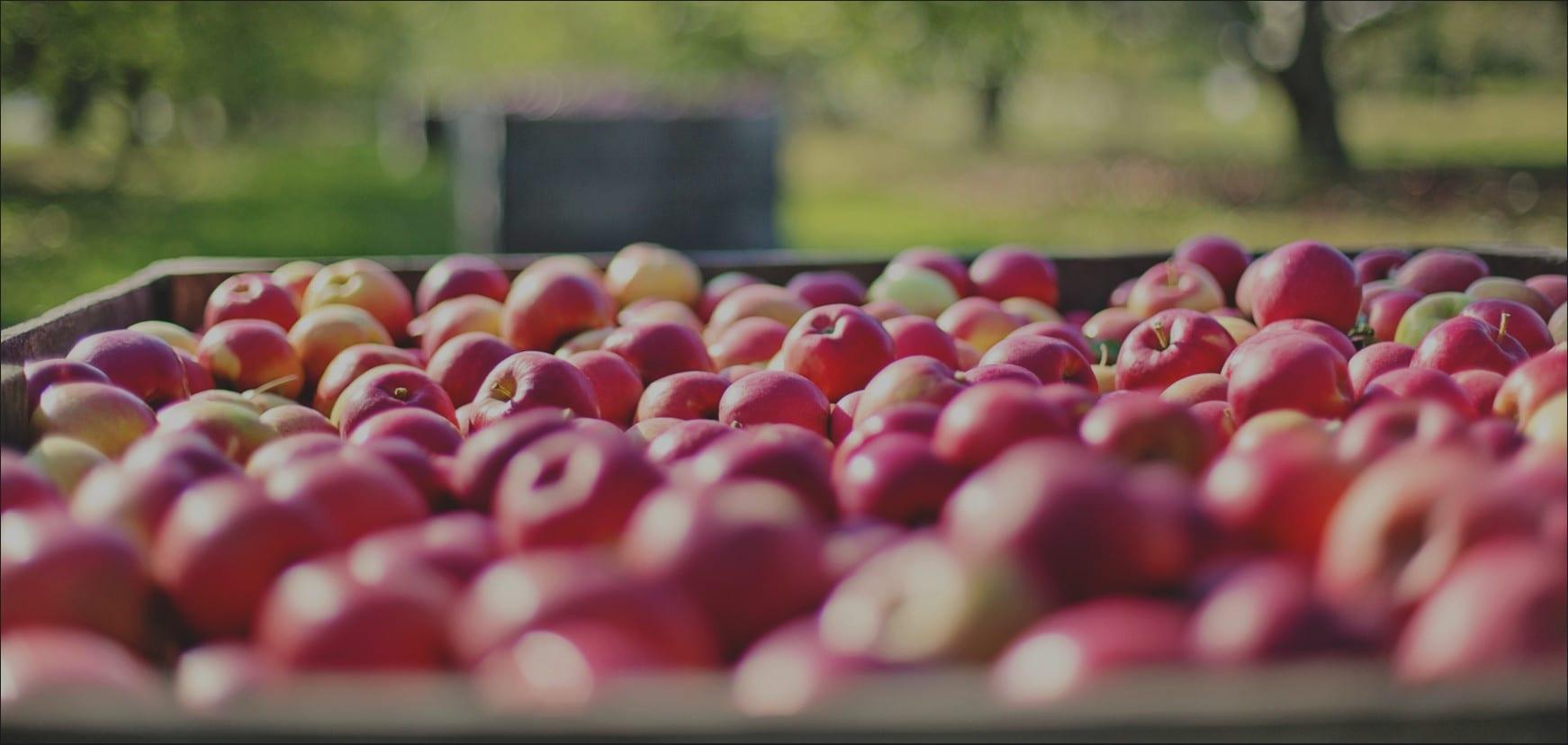 Äpfel in Großkiste