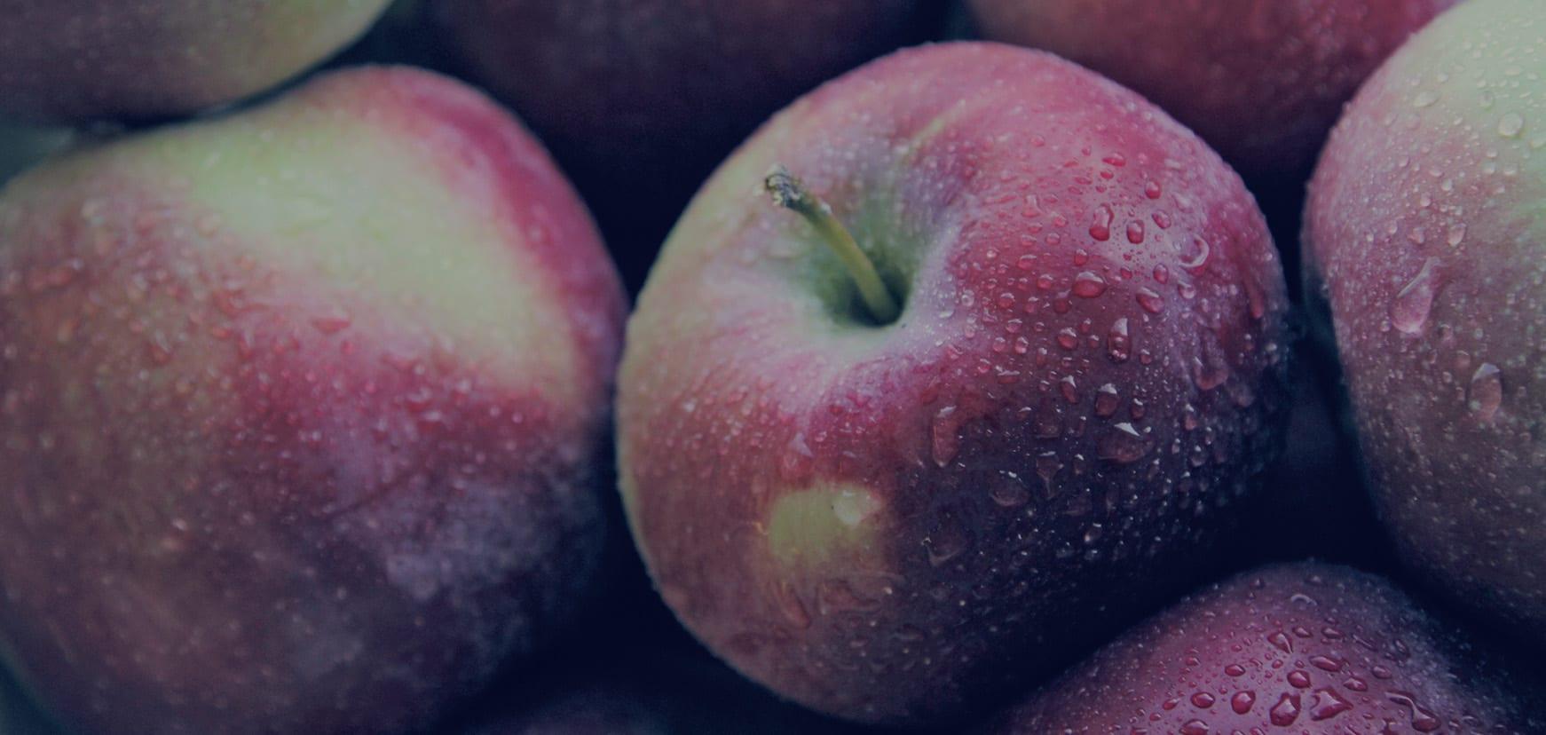 Altländer Äpfel mit Morgentau