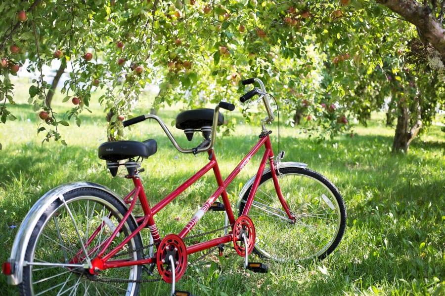 Tandem Fahrrad unter Apfelbäumen