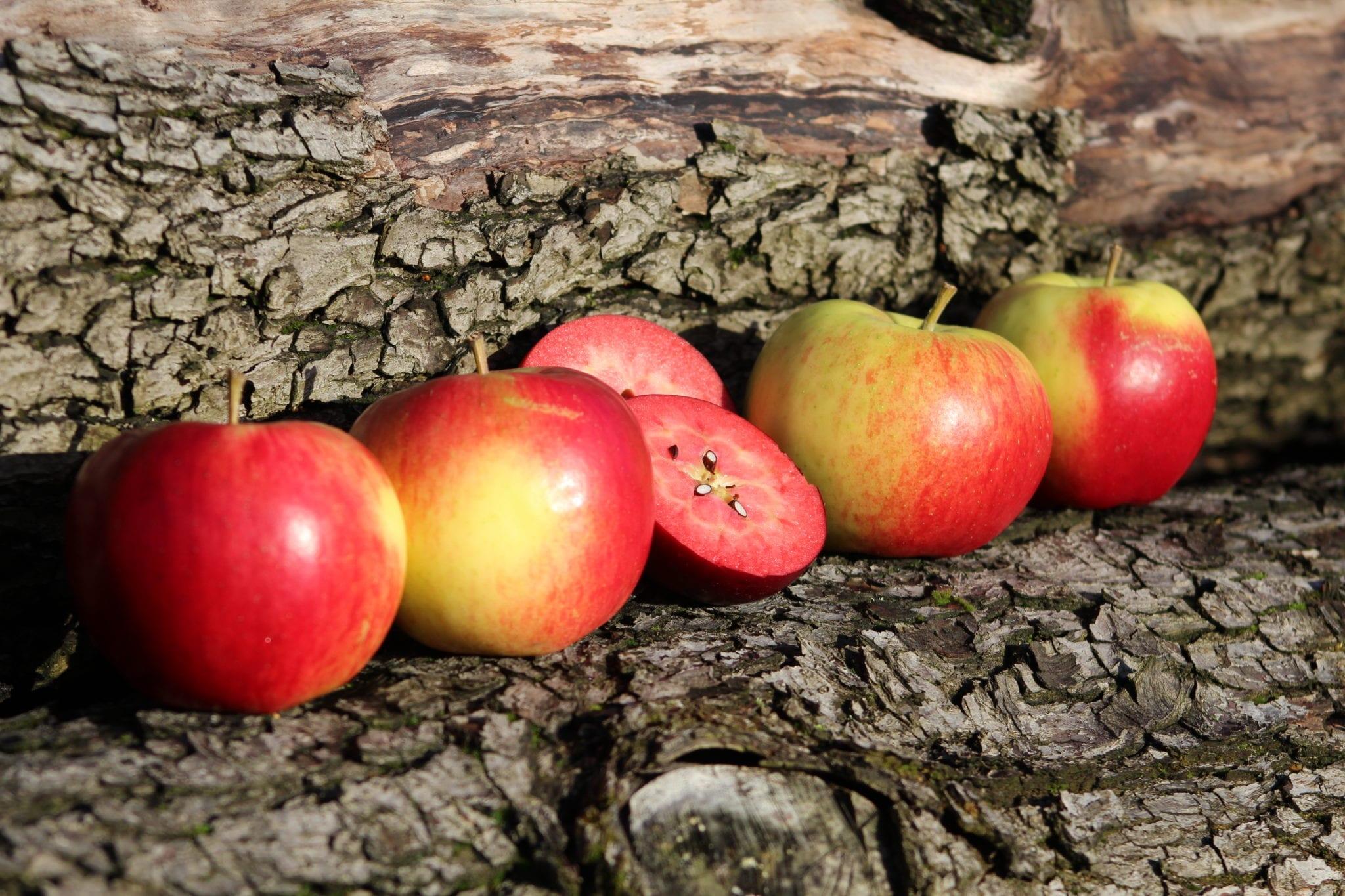 Altländer Äpfel