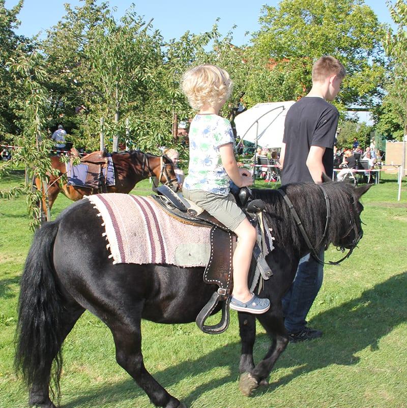 Ponyreiten im Alten Land