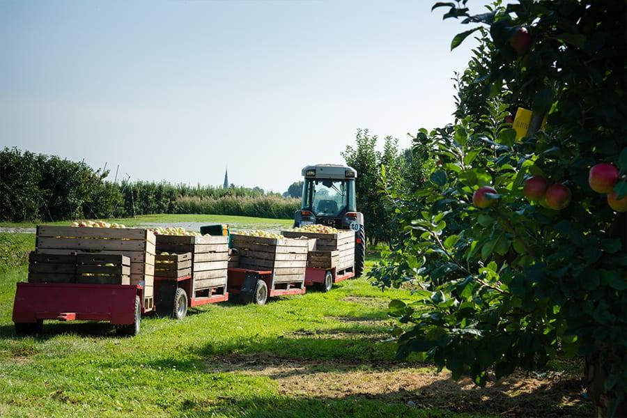 Erntewagen in Altländer Apfelplantage