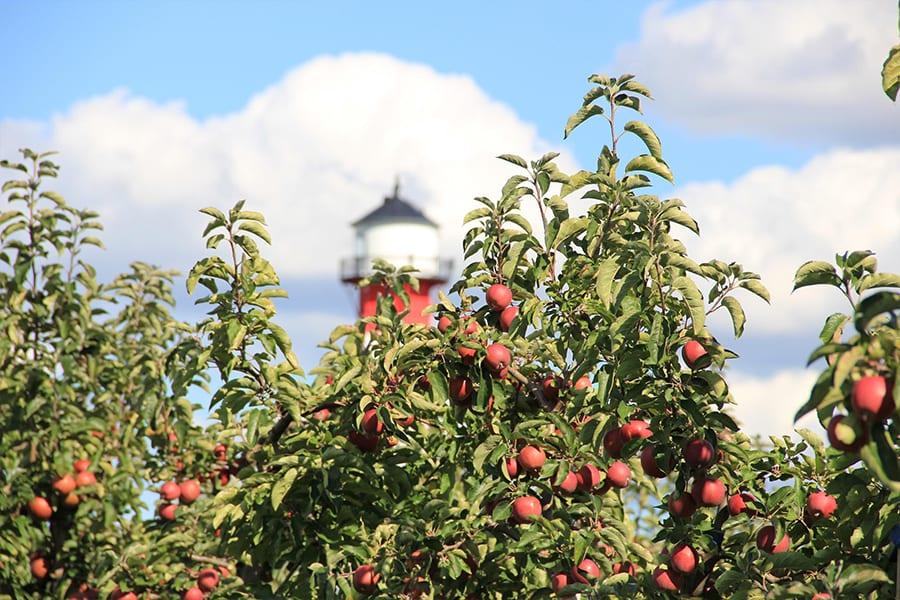 Leuchtturm mit Apfelbäumen im Alten Land