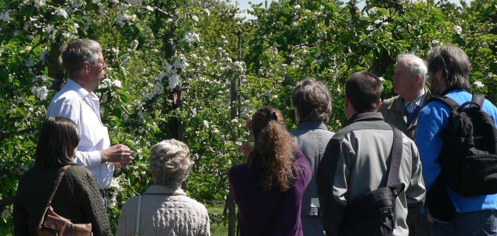 Obsthofführung auf dem Obsthof Bey im Alten Land