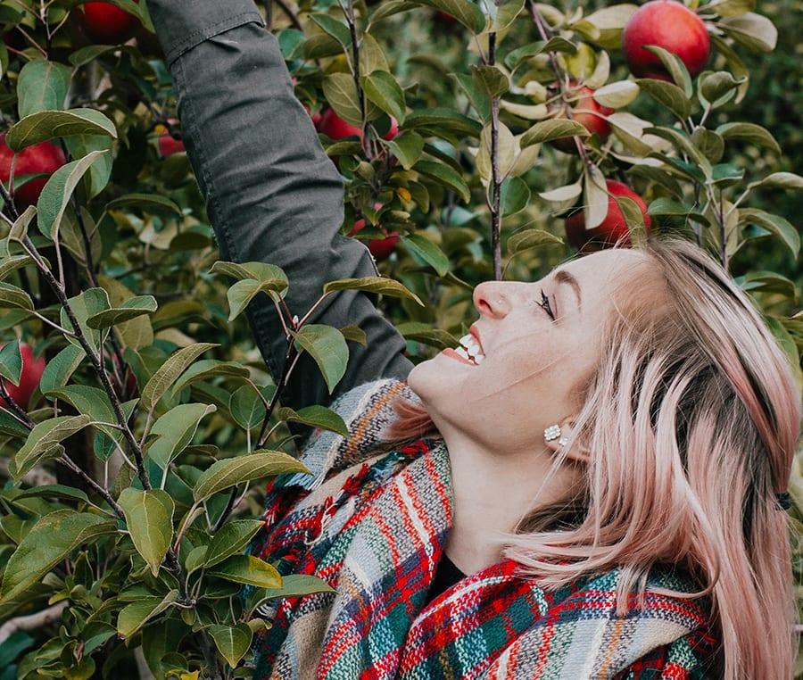 Äpfel selbst pflücken im Alten Land