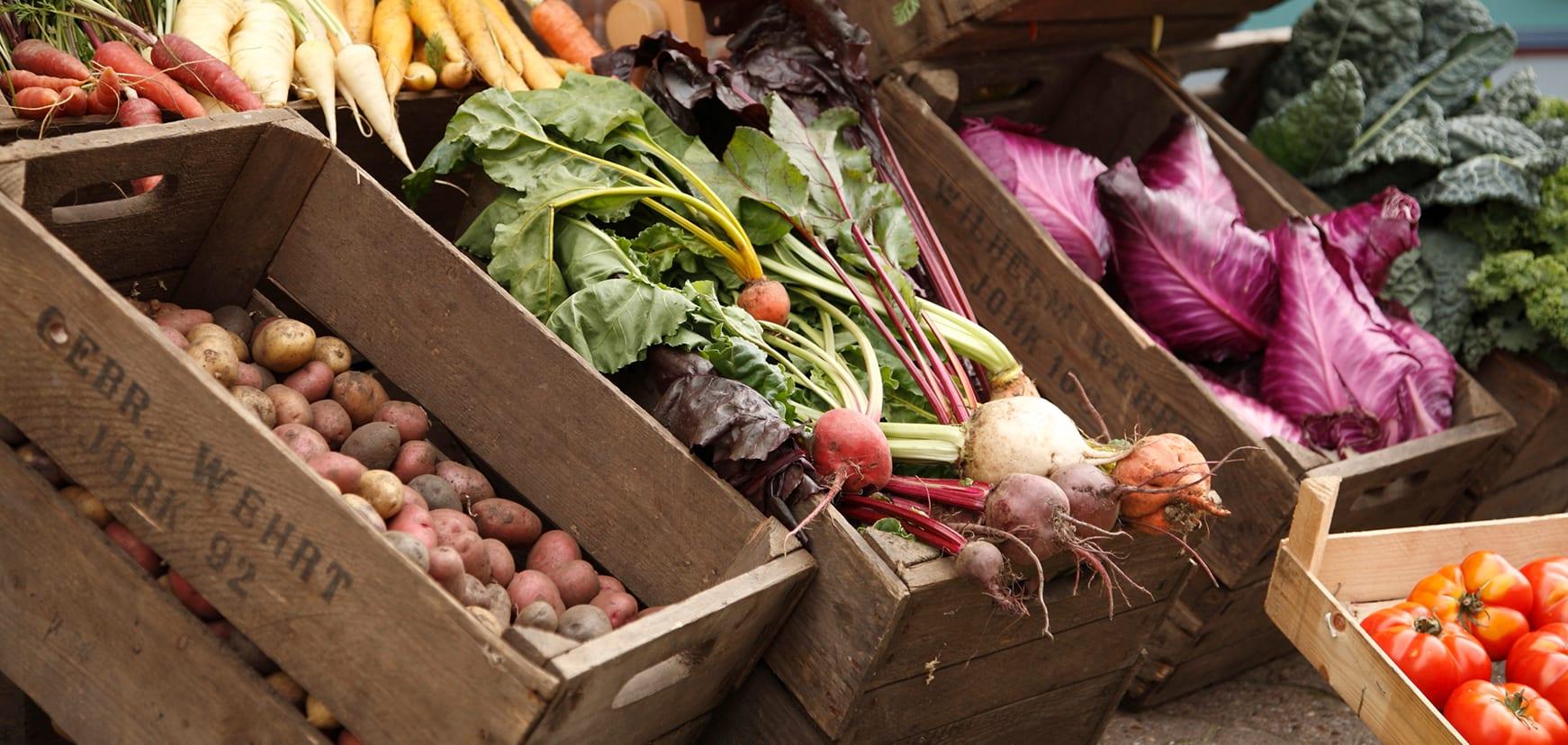 Alte Gemüsesorten aus dem Alten Land