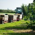 Erntezug während Apfelernte im Alten Land