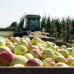 Altländer Äpfel im Erntewagen