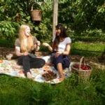 Picknick unterm Kirschbaum im Alten Land