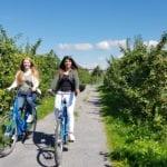 Tourismusverein Altes Land e.V. Radfahrer Apfelplantage